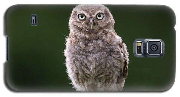 Fluffy Mcfluff-face Galaxy S5 Case