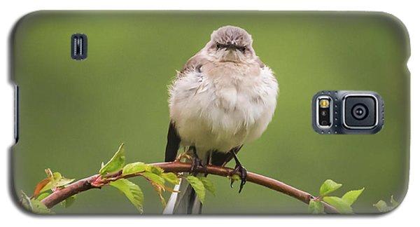 Fluffy Mockingbird Galaxy S5 Case by Terry DeLuco