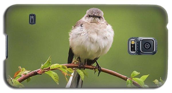 Fluffy Mockingbird Galaxy S5 Case