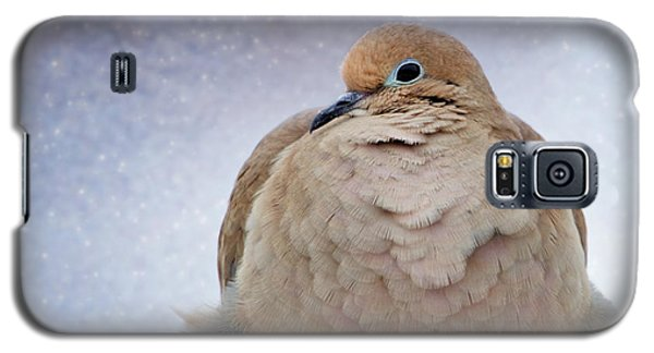 Fluffy Mourning Dove Galaxy S5 Case