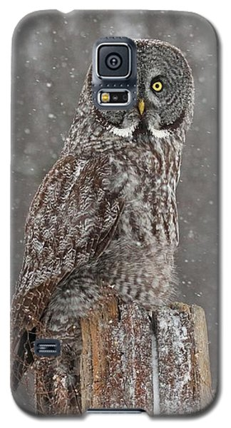 Flurries In The Forecast Galaxy S5 Case