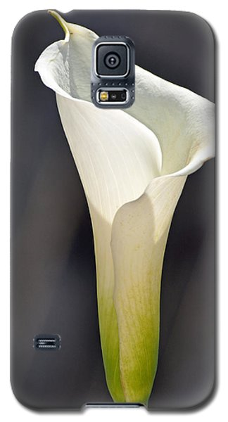 Fluted Galaxy S5 Case