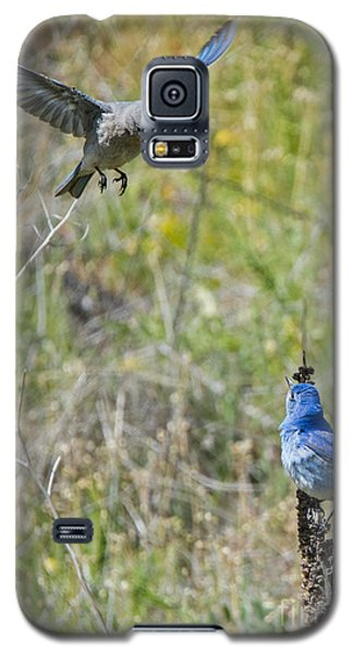 Flyby Flirt Galaxy S5 Case by Mike Dawson