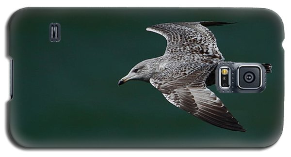 Flyby Galaxy S5 Case by Richard Patmore