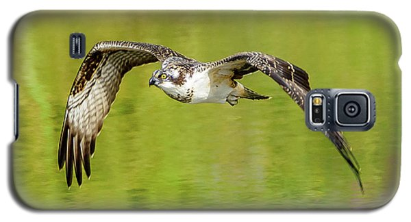 Flying Osprey Galaxy S5 Case by Jerry Cahill
