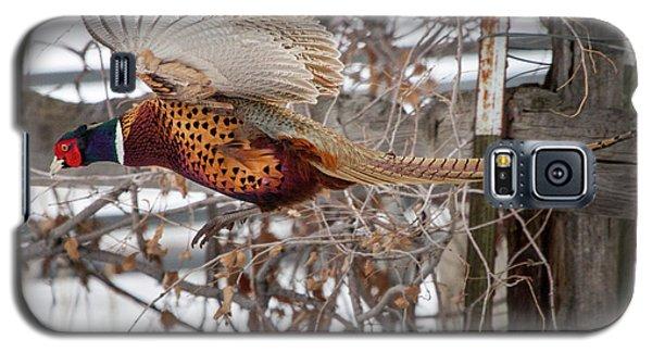 Flying Pheasant Galaxy S5 Case