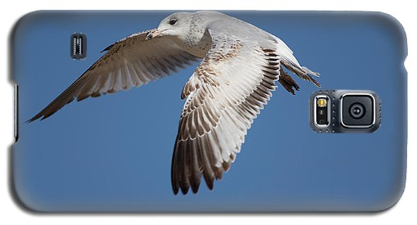 Flying Seagull Galaxy S5 Case