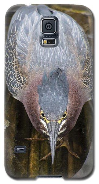 Focused Green Heron Galaxy S5 Case