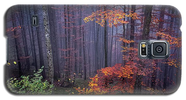 Galaxy S5 Case featuring the photograph Fog And Forest Colours by Elena Elisseeva