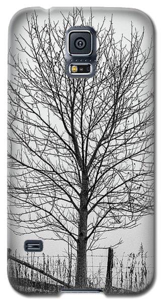 Foggy Lone Tree Hill Fine Art Galaxy S5 Case