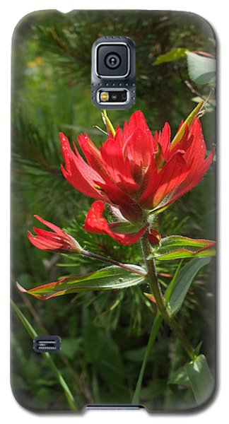 Galaxy S5 Case featuring the photograph Foothills Paintbrush by Scott Kingery