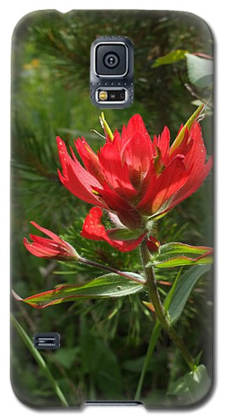 Foothills Paintbrush Galaxy S5 Case by Scott Kingery