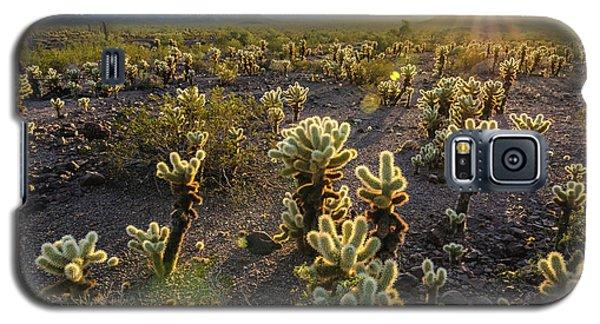 Sea Of Cholla Galaxy S5 Case