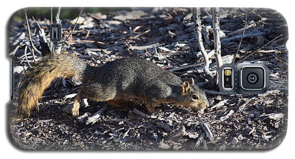 Squirrel Pprh Woodland Park Co Galaxy S5 Case
