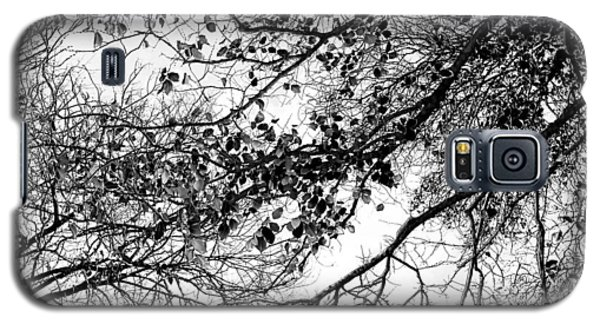 Featured Images Galaxy S5 Case - Forest Canopy Bw by Az Jackson