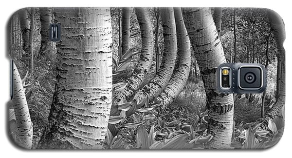 Forest Curves Galaxy S5 Case