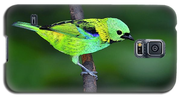 Forest Edge Galaxy S5 Case by Tony Beck