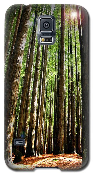Forest Glade Galaxy S5 Case
