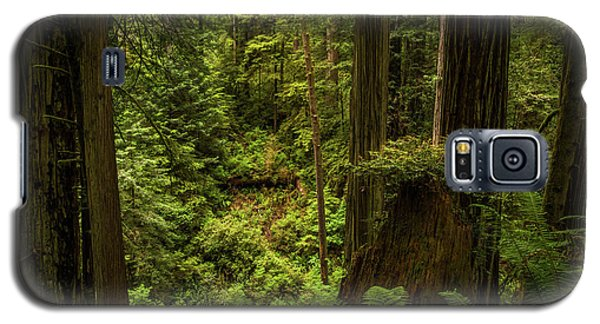 Forest Primeval Galaxy S5 Case