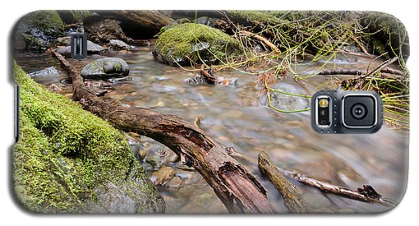 Forest River Details Galaxy S5 Case