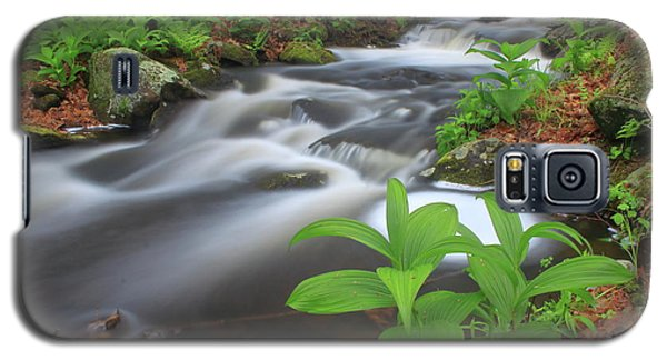 Forest Stream And False Hellabore In Spring Galaxy S5 Case by John Burk