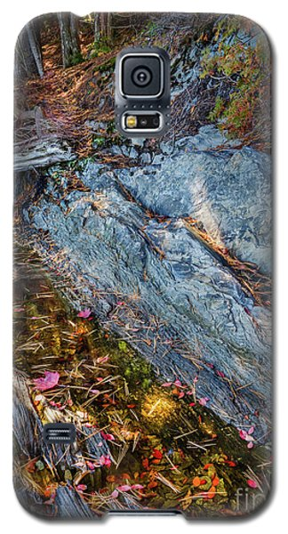 Forest Tidal Pool In Granite, Harpswell, Maine  -100436-100438 Galaxy S5 Case by John Bald