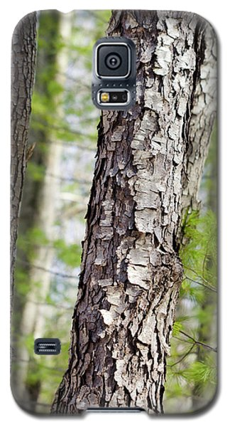 Galaxy S5 Case featuring the photograph Forest Trees by Christina Rollo