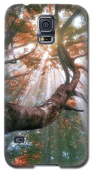 Forest With Fog And Sun Rays Galaxy S5 Case