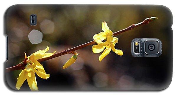 Forsythia Flowers Galaxy S5 Case