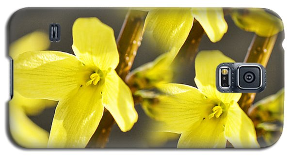 Forsythia Three Galaxy S5 Case by Traci Cottingham