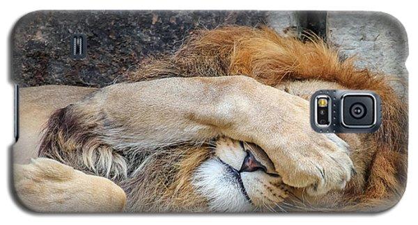 Fort Worth Zoo Sleepy Lion Galaxy S5 Case