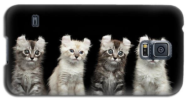 Four American Curl Kittens With Twisted Ears Isolated Black Background Galaxy S5 Case