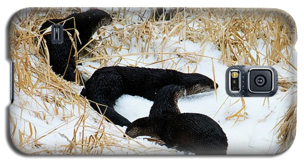 Otter Galaxy S5 Case - Four Ashore by Mike Dawson