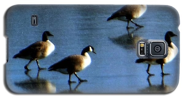 Galaxy S5 Case featuring the photograph Four Geese Walking On Ice by Rockin Docks Deluxephotos