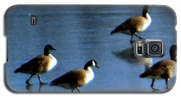 Four Geese Walking On Ice Galaxy S5 Case