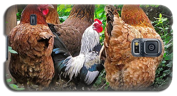 Four Hens And A Rooster Galaxy S5 Case by Sean Griffin