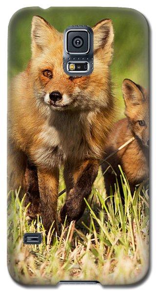 Fox Family Galaxy S5 Case by Mircea Costina Photography