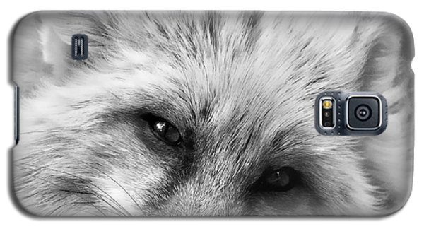 Fox Head Black And White Square Format Galaxy S5 Case by Laurinda Bowling