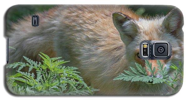 Fox In The Ferns Galaxy S5 Case