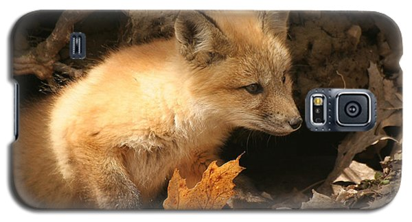 Galaxy S5 Case featuring the photograph Fox Kit At Entrance To Den by Doris Potter