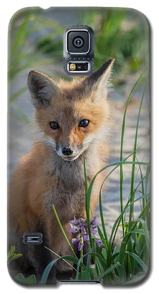 Fox Kit Galaxy S5 Case