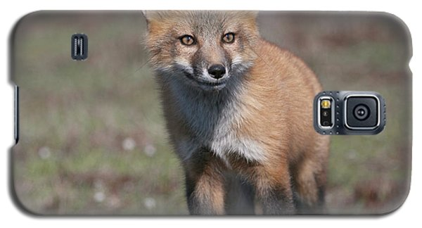 Galaxy S5 Case featuring the photograph Fox Kit by Elvira Butler
