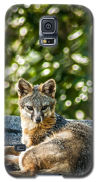Fox On Roof Galaxy S5 Case