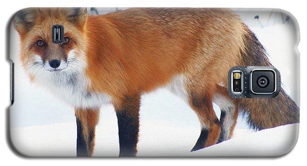 Fox On The Prowl Galaxy S5 Case