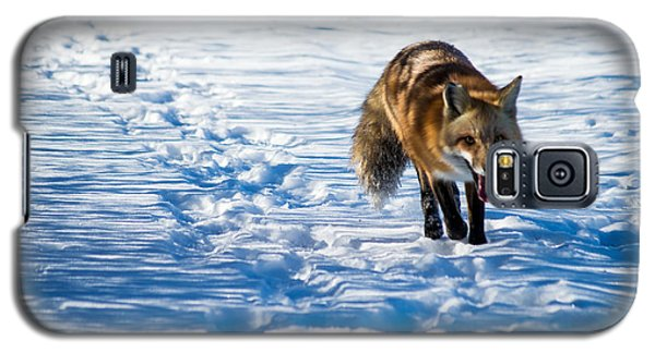 Fox Path Galaxy S5 Case