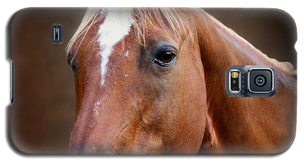 Fox - Quarter Horse Galaxy S5 Case