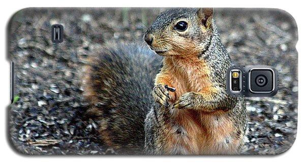 Fox Squirrel Breakfast Galaxy S5 Case