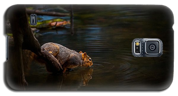 Fox Squirrel Drinking Galaxy S5 Case
