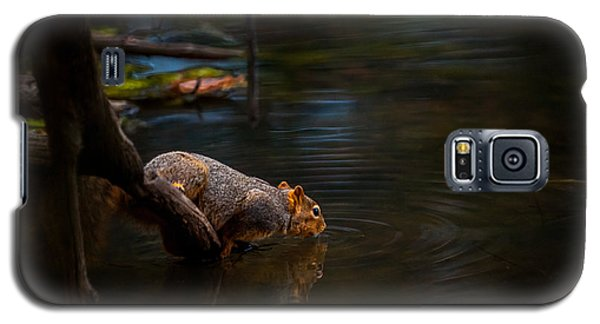 Fox Squirrel Drinking Galaxy S5 Case