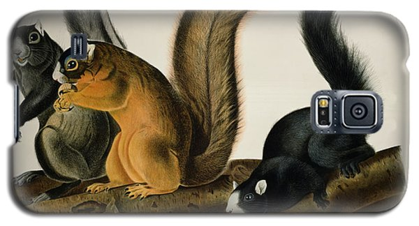 Fox Squirrel Galaxy S5 Case